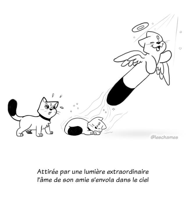 Les Châmes BD04 - les chats qui voulaient retenir les âmes - page03