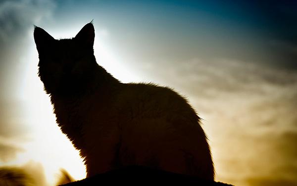 Les âmes des animaux nous entourent en permanence - les chames