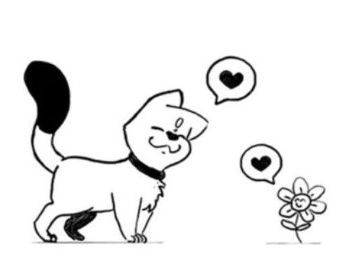 Le chat qui aimait la fleur
